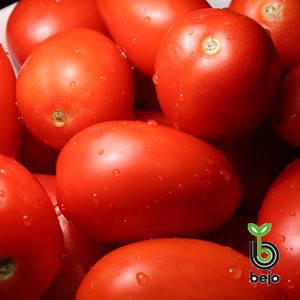 Семена томата Бенито F1 5г (прим.2000сем) (Бейо/Bejo) — ранний (65-68дн), красный, детерминантный, сливовидный, фото 2