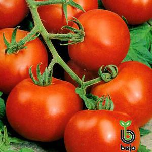 Семена томата Топспорт F1 5 г (Бейо/Bejo) — средне-ранний (70-75 дней), красный, детерминантный, круглый