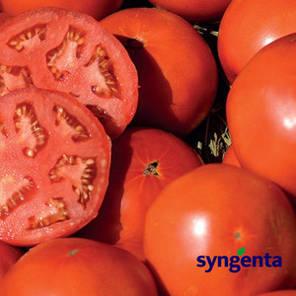 Томата Бобкат F1 (Syngenta) 1 000 семян — средне-ранний (60-65 дня), красный, детерминантный, круглый, фото 2