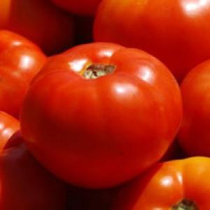 Семена томата Бобкат F1, 1000 семян — средне-ранний, красный, детерминантный, круглый, Syngenta