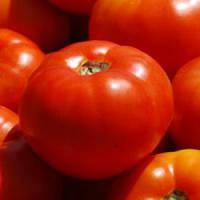 Семена томата Бобкат F1 (Syngenta), 1000 семян — средне-ранний, красный, детерминантный, круглый,1,2,3