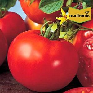 Семена томата Шеди Леди F1 (Nunhems) 1000 семян — ранний (98-108 дней), красный, детерминантный, круглый, фото 2
