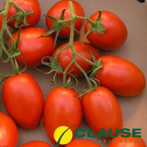Семена томата ДИНО F1/DINO F1 5000 сем —  детерминатный, ранний, сливовидный, фото 2