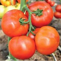 Семена томата Флорида F1/FLORIDA F1, 1000 сем — среднеспелый, детерминантный