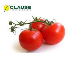 Семена томата Акела F1 (Clause) 1000 сем — ранний (65 дней), красный, детерминантный, круглый