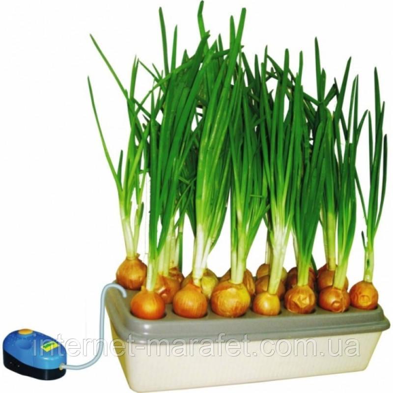 """Домашня гідропонна грядка """"Луково Щастя"""" - вирощування цибулі будинку"""