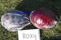 Семена капусты краснокачанной Рокси F1 /  Roxy F1 (Seminis)