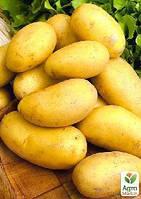 """Семенной ранний картофель """"Бюррен"""" (на жарку, 1 репродукция) 1кг"""