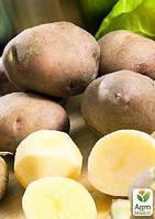 """Семенной среднеранний картофель """"Инноватор"""" (на пюре, 1 репродукция) 1кг"""