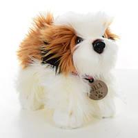 Мягкая игрушка SD0942 (12шт) собачка, ши тцу, 24см