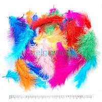 Перья натуральные цветные, 13-15 см, 50 шт