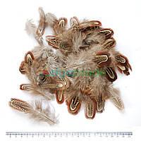 Перья фазана коричневые, 4-8 см, 50 шт