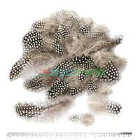 Перья серые с горохом, 5-10 см, 50 шт