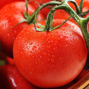 Семена томата Толстой F1 (Bejo/САДЫБА ЦЕНТР) 0,05 г — ранний (70-72 дня), красный, индетерминантный.