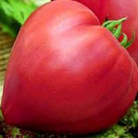 Семена томата Бычье сердце F1 (Satimex/САДЫБА ЦЕНТР) 0,2 г — средне-спелый,КРУПНОПЛОДНЫЙ,малиновый, индетермин