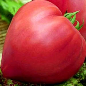 Семена томата Бычье сердце F1 (Satimex/САДЫБА ЦЕНТР) 0,2 г — средне-спелый, КРУПНОПЛОДНЫЙ, малиновый, индетерм, фото 2