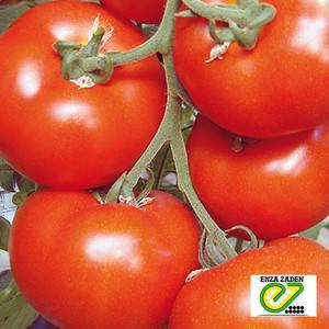 Семена томата Белле F1, 50 сем — ранний (65 дн), красный, плоско-круглый, индетерминантный, Enza Zaden, фото 2