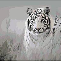 Картина по номерам Хищный взгляд 40х40 (КНО4000), фото 1