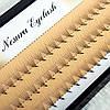 Ресницы Nesura 6d (60 пучков)