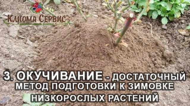 Окучивание – достаточный метод подготовки к зимовке низкорослых растений.