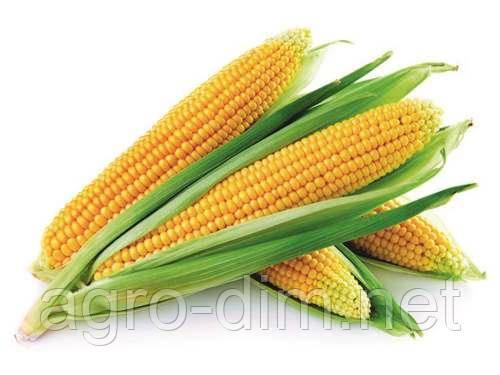 Семена кукурузы Днепровский 181 СВ (ФАО 180)