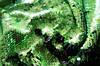 Паеточная ткань светло зеленая