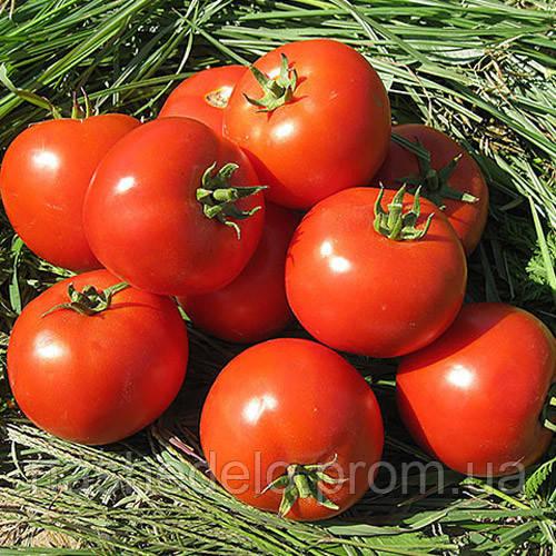 Юсуф 408  500 сем  томат Енза Заден
