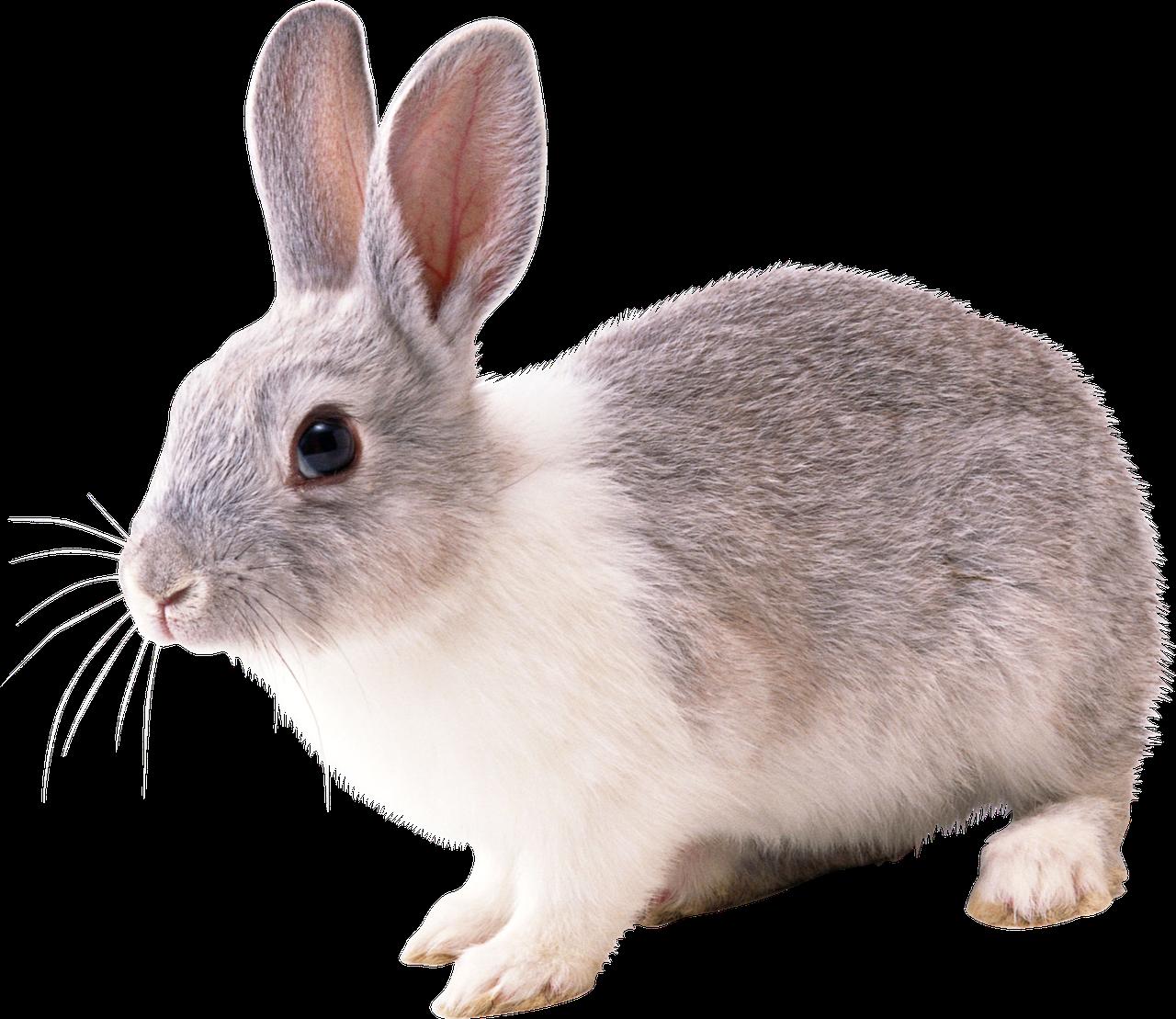 "Премикс для кроликов ""Откорм+"" 4%"