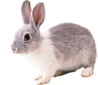 """Премикс для кроликов """"Откорм+"""" 4% , фото 1"""