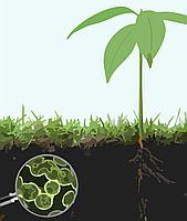 Проведення агрохімічних досліджень ґрунту (в тому числі на наявність родючого шару ґрунту)