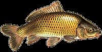 Мультиферментная кормовая добавка для рыб
