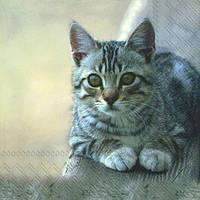 "Салфетка 33х33см (1шт) ""Милый кот"""