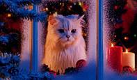 Видео где найти новогоднее настроение !