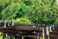 Важные моменты внесения удобрений при посадке семечковых и косточковых деревьев.