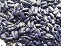 семена подсолнечника рими цена, подсолнечник римисол под евролайтинг, купить семена подсолнечника рими, семена римисол под евролайтинг, цена на рими в украине, семена подсолнуха римисол, заказать подсолнечник рими, семена под евролайтинг римисол, сем