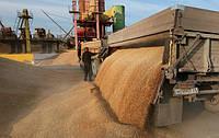 Какой урожай зерновых собрали в 2017 году?