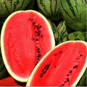 Семена арбуза Леди F1 (Nunhems/ АГРОПАК+) 100 сем — ранний (65 дн), удлиненной формы, СЛАДКИЙ! вес 9-12 кг
