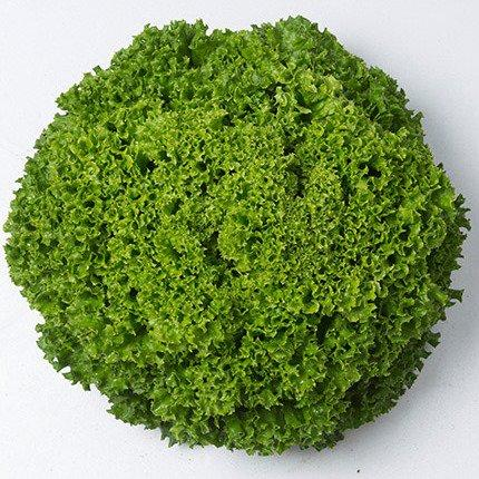 Семена салата Илема, (5000 сем.)