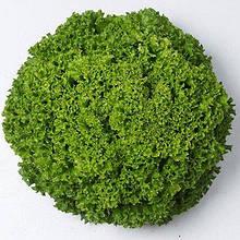 Семена салата Илема, (5000 сем.) Enza Zaden