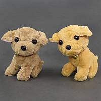 Мягкая игрушка Собачка С 23390 , 2 цвета