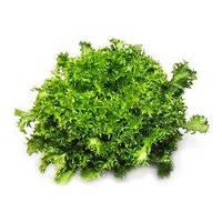 Семена салата Сигал, )50 драже)