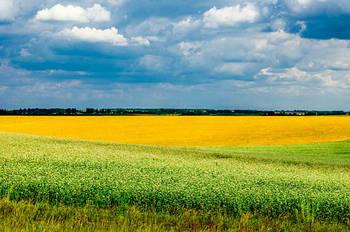 Земкадастр готов к старту земельного рынка