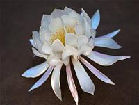 Краситель белый колорант для смол, 15 г