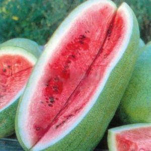 Арбуза Чарльстон Грей семена /Франция (500 г) — среднеранний сорт с округлыми полосатыми плодами, фото 2