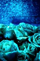 Светящаяся краска для цветов и живых растений