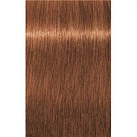 Краска для седых волос 7-710 Igora Royal Absolutes Средне-Русый Медный сандре 60 мл