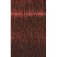 Краска для седых волос 6-80 Igora Royal Absolutes Темно-Русый Красный Натуральный 60 мл
