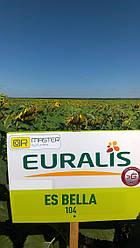 Семена подсолнечника ЕС Белла (Euralis Semences)