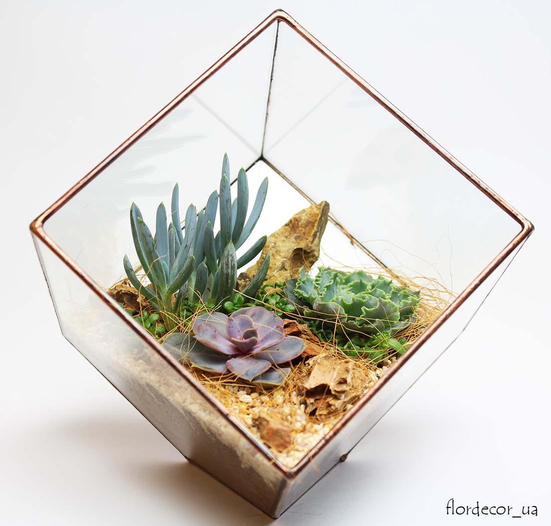 Флорариум Cub mini с суккулентами