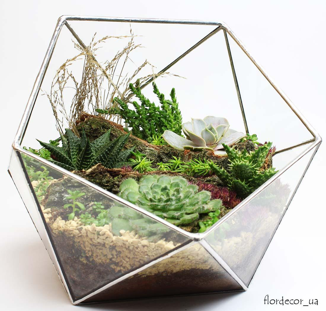 Флорариум Basket maxi с суккулентами